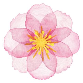 EDLA 19 flor japonesa